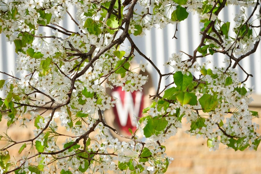 "Picture of ""W"" on the Camp Randall Sports Center seen through spring blooms"