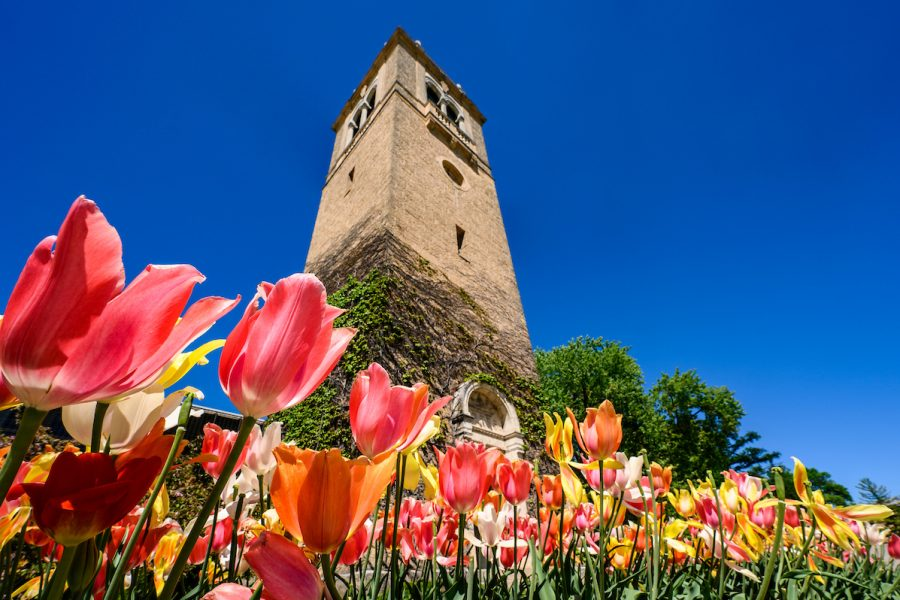 Flowers frame the view of Carillon Tower